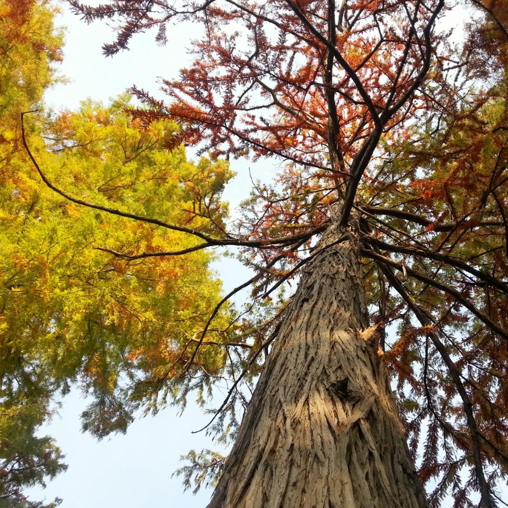 autumn tree by Cristina Parus @ creativemag.ro