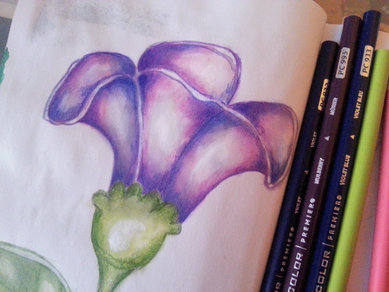 Violet flower in colored Pencils by Cristina Parus @ creativemag.ro